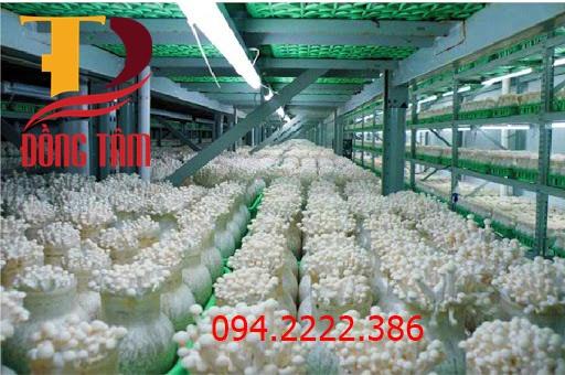 Thi công kho lạnh bảo quản nấm cho anh Hùng rau sach an toàn tại Đội Cấn -  Hà Nội